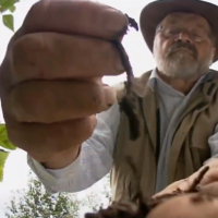 Agrar-Rebell Sepp Holzer – Die Situation in der Landwirtschaft ist furchtbar!