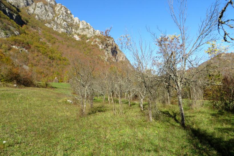 Permakultur-Projekt in Bosnien; 2. Zwetschgen-Bäume beschneiden, Hügelbeete anlegen