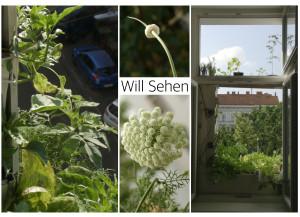 Will_Sehen