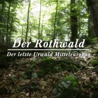 Der letzte Urwald in Mitteleuropa